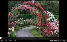 Um lindo jardim