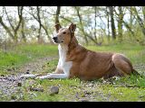 Smooth Collie, Horses, Dogs, Animals, Animales, Animaux, Horse, Animal Memes, Animal