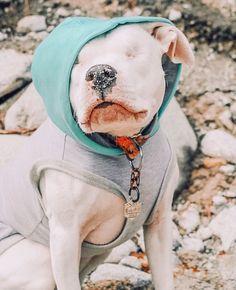 Cozy in style, Stevie is wearing our Skye hoodie 🤍 📸: @stevie_the_wonder_dogo —— #thesharperbarker #luxurydog #shopsmall #dogaccessories #luxurylifestyle #doghoodies #dogbrands #bamboohooodie #fourleggedfashion #whitedogs #dogstagram #puppylife #dailydog #madeinyvr #adventuredog #mykidshavepaws #dailybarker #blinddogs #pitbullclothes #bigdogclothes #bestwoof #thedogsofvancouver #yvrdogs #dogsofcanada #buzzfeedpets Dog Hoodie, White Dogs, Dog Accessories, Four Legged, Best Dogs, Vancouver, Pitbulls, Cozy, Puppies