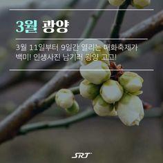 IAhbv Travel Tours, Travel Information, Korean, Life, Korean Language