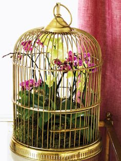 Floral Arrangement How-to: Birdcage Orchids...just scored an amazing very tall bird cage from Goodwill and can't wait to craft-it-out!!