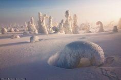 Le froid polaire recouvre une forêt pour la transformer en un magnifique paysage extraterrestre