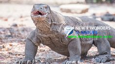 Get special deal for Komodo Open Trips #komodoopentrips #komodoopentrip #komodotrip #komodotours