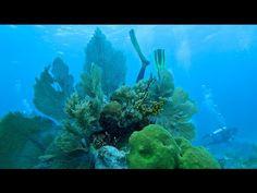 Scuba Diving Key Largo, Molasses Reef Scuba-do Charter - http://www.florida-scubadiving.com/florida-scuba-diving/scuba-diving-key-largo-molasses-reef-scuba-do-charter/
