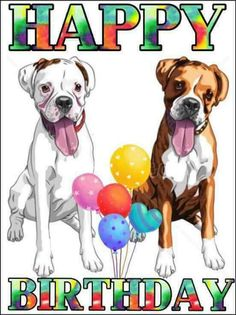 89 Boxers Birthdays Ideas Boxer Boxer Dogs Birthdays