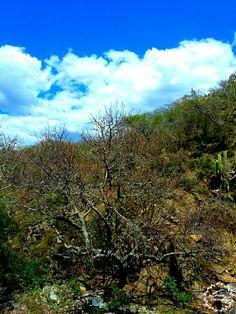 Las palmas Guanajuato
