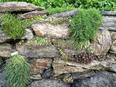 Succulent and moss planted rock wall garden at Wave Hill in Riverdale (Bronx) NY… – Modern Design - Modern Succulent Rock Garden, Succulents Garden, Landscaping With Rocks, Garden Landscaping, Landscaping Retaining Walls, Rock Wall Gardens, Wave Hill, Rock Retaining Wall, Moss Plant