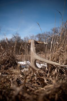 The Ultimate Shed Hunting Resource - Expert Shed Hunting Tips, Strategies, and Suggestions