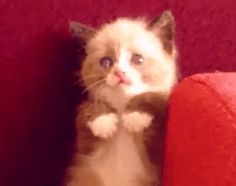 Admit it.  This is the cutest, funniest cat fails video you've ever seen...