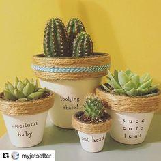 Ideas succulent pots ideas house plants for 2019 Succulent Puns, Succulent Care, Succulent Terrarium, Succulents Garden, Terrariums, Painted Flower Pots, Painted Pots, Indoor Garden, Indoor Plants