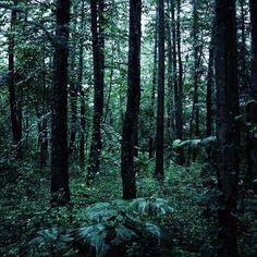 "22 Likes, 2 Comments - mitsue kobayashi (@mkphoto14) on Instagram: ""#ricoh #ricohgr #ricohgr2 #reco_ig #ig_japan #igersjp #forest #rainy #rainyday #rainyforest #trees…"""