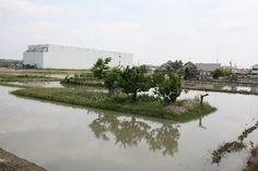 島畑3.JPG