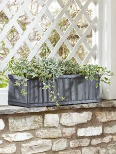 Trough shaped planters are perfect for planting your favourite blooms all in a row. Trough Planters, Italian Garden, Container Plants, Shrubs, Balcony, Vases, Outdoor Living, Pots, Bloom