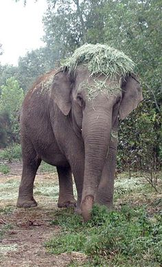 Bunny and her Bonnet  The Elephant Sanctuary (very sweet story about the sanctuary in Tennesee. Bunny was retired from 40 years in zoo life and lived in the sanctuary with other elephants for ten years before dying of old age.)