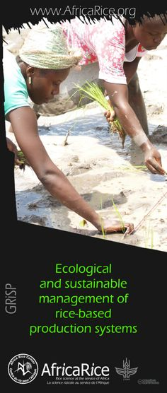 Global Rice Science Partnership (GRiSP) Themes Theme 3: Ecological and sustainable management of rice-based production systems Photo, Poster Design : R.Raman, AfricaRice