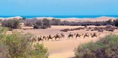 Ride across the Gran Canaria Sand Dunes on the back of a camel.