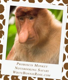 Notebooking Safari - Brunei and Proboscis Monkey. Are you ready to see one of the most unique animals in the entire world? They are called proboscis monkeys. Come with me into the jungle and I'll see if I can spot them for you. You should probably bring a pair of binoculars with you; these animals like to climb high up into the trees.