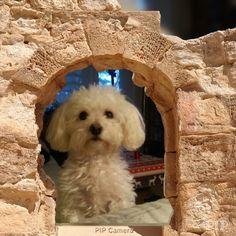Hunde Foto: Anke und Sunny - Meine Prinzessin Hier Dein Bild hochladen: http://ichliebehunde.com/hund-des-tages  #hund #hunde #hundebild #hundebilder #dog #dogs #dogfun  #dogpic #dogpictures