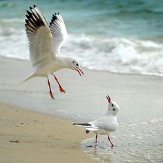 Seagulls 500px / * Duel * by clement jousse