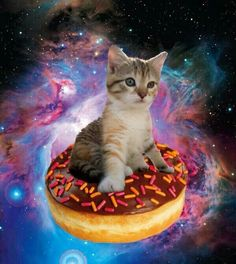 Cats with donuts
