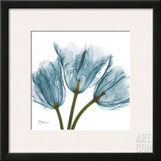 Tulips in Blue Framed Art Print by Albert Koetsier at Art.com