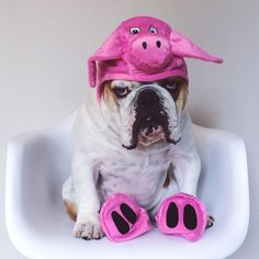 """❤ """"My Momma made me do it. I look silly, I am gonna' pout till dinner""""! ❤ Posted on Bully Pics"""