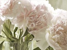 Peony Photograph Floral Art Print Pink Sepia Shabby by JudyStalus, $17.00