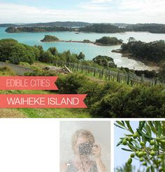 {Edible Cities} Waiheke Island, New Zealand and olive oil, with Nikki from Art and Lemons / @Nikki Gardner