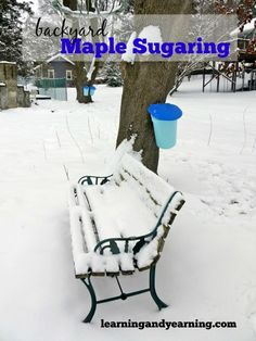 Have a maple tree or two? Hope you give syrup making a try, & backyard maple sugaring is fun! Organic Gardening, Gardening Tips, Homestead Gardens, Natural Living, Simple Living, Sugaring, Wild Edibles, Maple Tree, Preserving Food