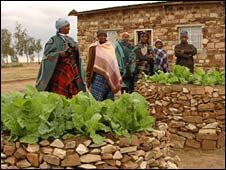 Mahaha Mphou - Inventor of the Keyhole Garden - Family tend their keyhole garden in Lesotho's central highlands