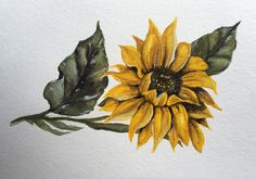 Sunflower  Original Watercolor by shealeenlouise on Etsy