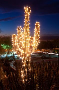 Arizona Christmas Tree | Photo by Jacek Joniec  with Pin-It-Button on FineArtAmerica