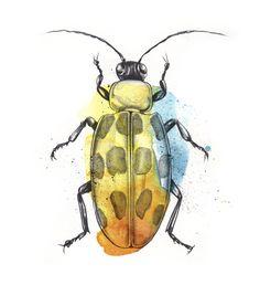 Esra Røise // Bugs