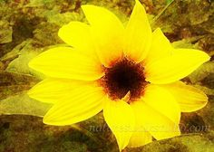 SILLY SUNFLOWERS.....................Gratitude Treasury by Pat Peters on Etsy
