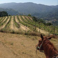 A horseback tour of the Santa Cruz Mountains.   #endoftheroad #roadtrips