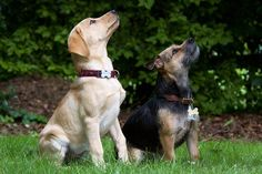 High-fives are fun, but some of the simplest dog training commands are actually the most important. They can actually save your dog's life.