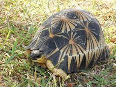 Gorgeous Shell Pattern