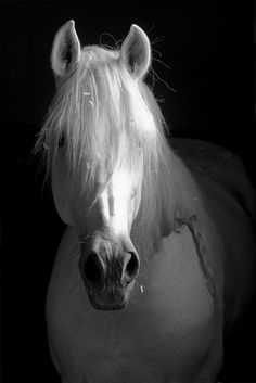 A sense of peace settles upon you when you spend time with a horse.  White beauty.