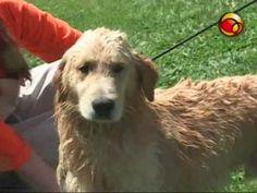 Aprenda a dar banho em seu cão em casa