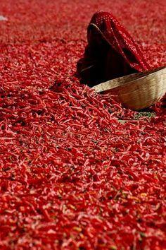 a sea of chili and beautiful sari
