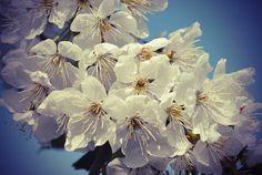 'Blütenzauber' von hannahw bei artflakes.com als Poster oder Kunstdruck $18.03