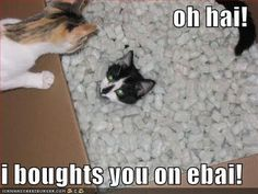 Funny Cat Pictures With Captions | Very funny cat pictures funny captions and cat pictures : Free Funny ...