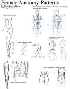 Female anatomy patterns drawing reference