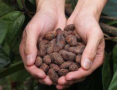 ca ca o「カカオ」のチョコレートは世界ではじめて「生チョコレート」を開発したシルスマリアの職人がコロンビアの地で大切に育てられた希少なカカオ豆を使用し、ひとつひとつ丁寧に作っています。