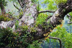 orchids   Flickr: Intercambio de fotos