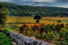 Autumn in Puglia