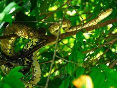 Osa Peninsula, Costa Rica Slideshow | TripAdvisor™