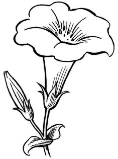 Easy Flower Drawings, Flower Drawing Images, Easy Drawings, Drawing Flowers, Hibiscus Flower Drawing, Flower Art, Flower Outline, Printable Flower Coloring Pages, Coloring Pages For Kids