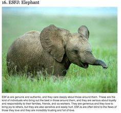 Community Post: 49 Pictures of Baby Elephants
