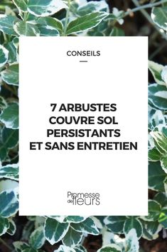 7 shrubs ground cover of persistent and without maintenance Air Plants, Cactus Plants, Evergreen Shrubs, Green Life, Cards Against Humanity, Rock, Cover, Planning, Galette